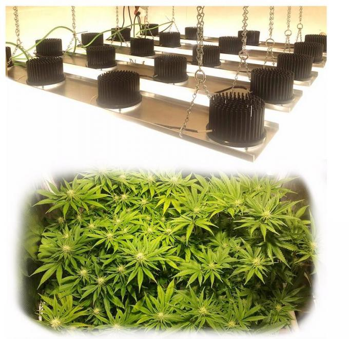 75-85 Watt Cree Led Grow Lights For Indoor Medical Plants , Energy Saving