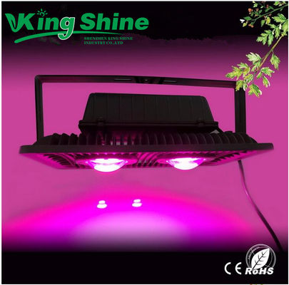 Cob LED Işık Grow